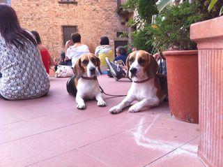 Tuscany_dog