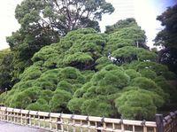 Park3_matsu