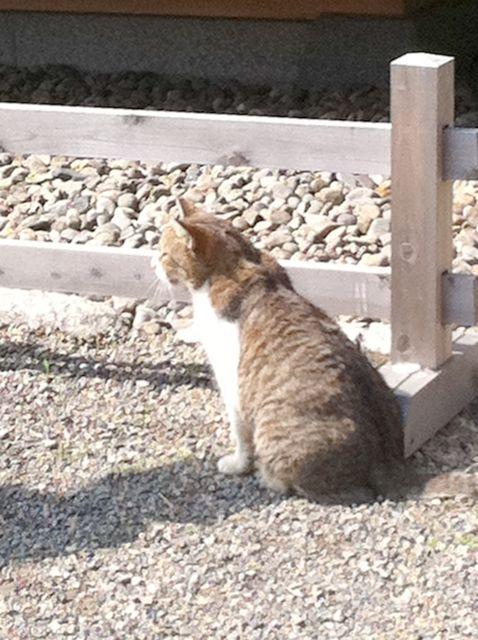 Park_cat
